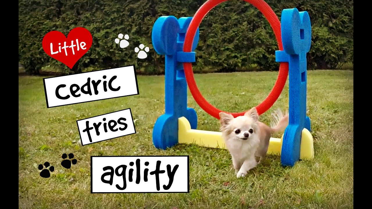 Diy Dog Agility Equipment Free
