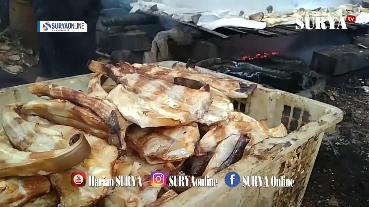 Ikan Cupang Di Surabaya