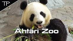 Pandas' life - Ähtäri Zoo - 4K