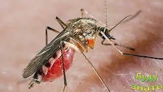 Почему укус комара чешется?