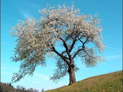 Antonio Vivaldi - Four seasons - complete at 432 Hz tuning