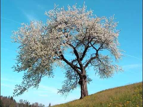 Antonio Vivaldi  Four seasons  complete at 432 Hz tuning