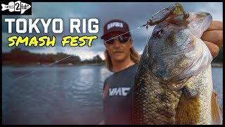 Tokyo Rigging Bass Shallow to Deep - First Impressions