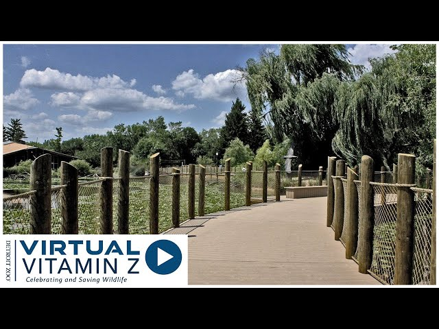 Virtual Vitamin Z | Learn about local wildlife who share our neighborhoods and how we can help them