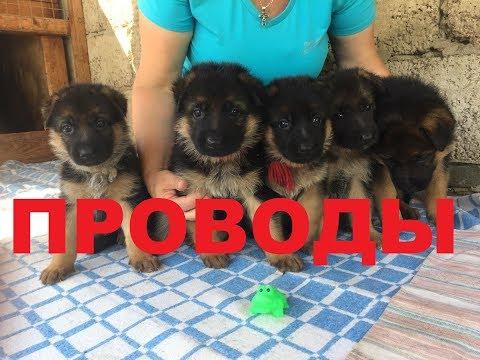 ПРОВОДЫ!!! Уехали на службу мои ребятки)))))
