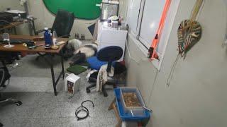 Chucho me destroza la oficina