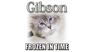 Gibson's Memorial - Frozen In Time