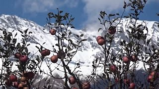Harsil uttarakhand (A beautiful documentary)