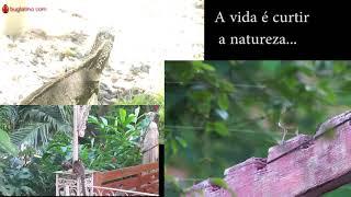 NTNQS Preservação