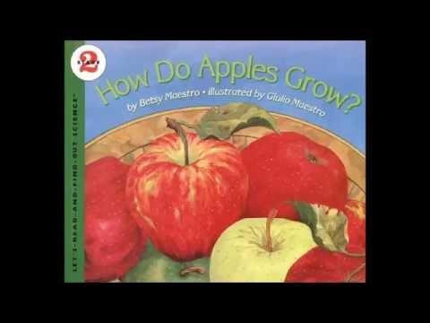 How Do Apples Grow - YouTube
