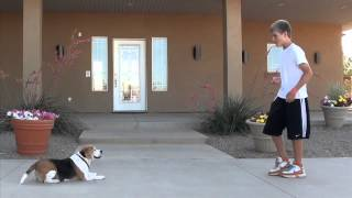 Southern Utah Certified Dog Trainer Starts Dog Program At Local Therapeutic Boarding School