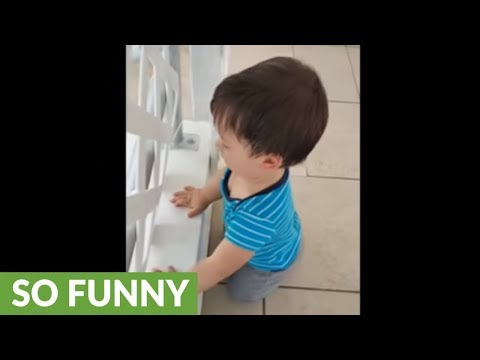Baby and dog invent new method of playing fetch