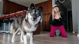 Faking My Death In Front of My Dog! Kakoa's Funny Reaction!