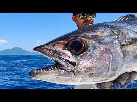 Dogtooth Tuna In Vanuatu!