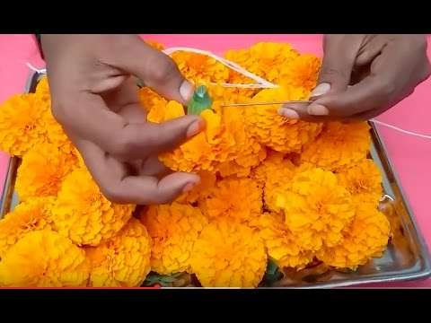How to string marigold garland l function decoration with marigold flowers l pongal decaration