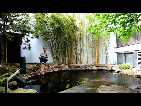modern-koi-blog-#1025---bambus-am-koiteich