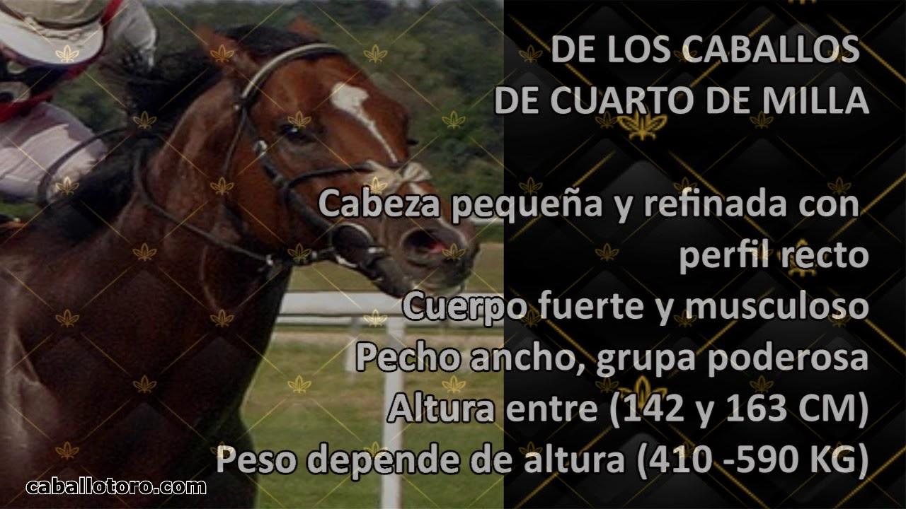 Caballos Cuarto de milla - CaballoToro.com