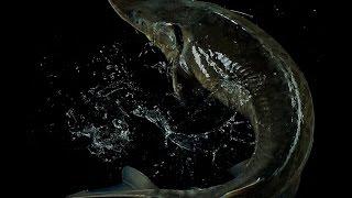 Азербайджанская буглама это рыба с овощами