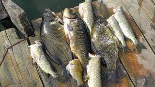 Рыба, как ее сохранить в жару после  рыбалки и подводной охоты(, 2013-08-21T07:36:33.000Z)