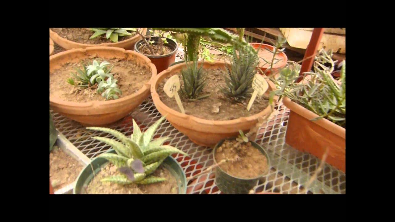 Vivero de cactus castillo youtube for Vivero de cactus
