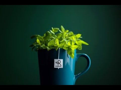 Crowdfunding Video - Roqberry - Artisan Tea Company