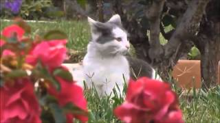 [Relax with Cat] Cat meowing funny copters (P3)