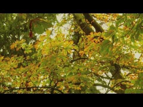 cantiga de otoño