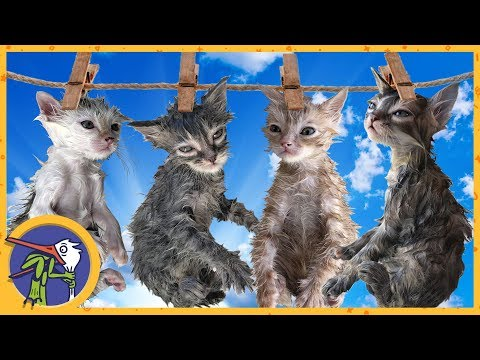 LIFEHACK - how to wash the kittens. CHALLENGE for catching fleas
