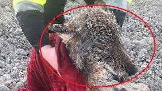 Рабочие спасли замерзшую собаку из ледяной реки, но выяснилось, что это вовсе не собака!