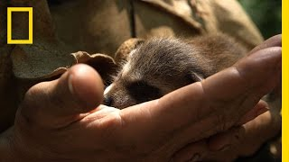 Live Free or Die DIY: How to Raise a Baby Raccoon
