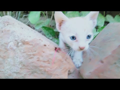 cats baby cute anb funny Baby cat videos compilaton..
