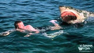 German Backpacker Shark Attack Off Australian Beach real or fake?