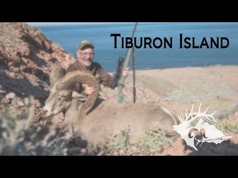 S10 E16 - Tiburon Island