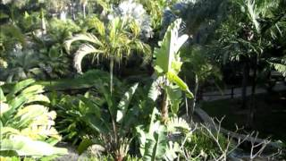 The Botanic Garden Molino de Inca in Torremolinos, Spain.