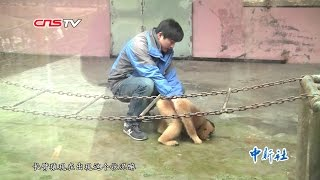 "发情猿猴无伴侣向饲养员""示爱"" / Lady monkey in heat takes her zookeeper als mate"