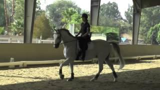 Karina Lyons Equinox Susanne Von Dieteze Dressage Clinic November 10, 2014