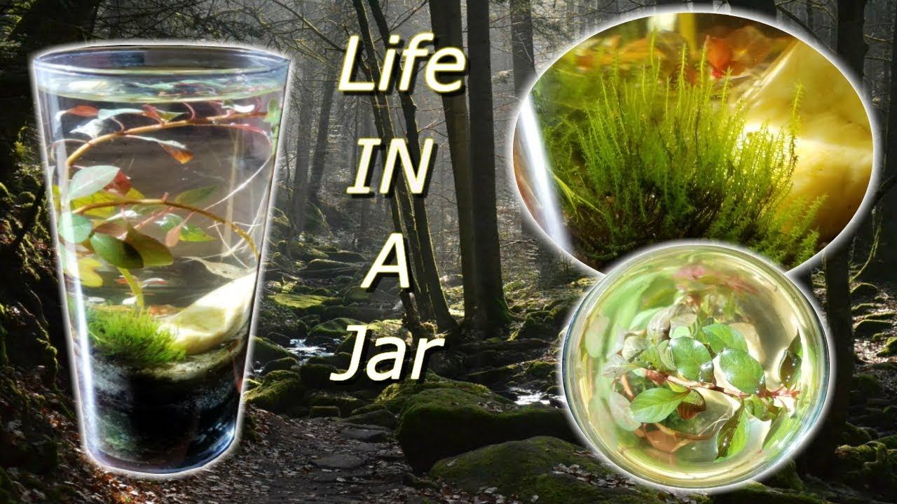 MY FIRST NANO AQUASCAPE (LIFE IN A JAR) DIY AQUASCAPING ...