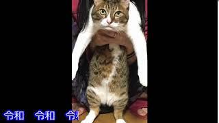 うちの猫の鳴き声が「令和」な件 SuperReiwaReiwaCat