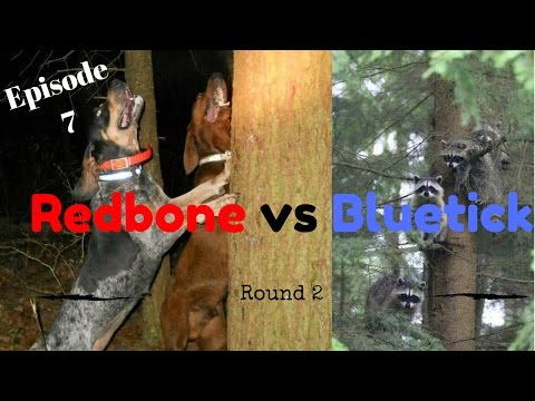 Redbone Vs Bluetick Round 2!!! Episode 7 Coon Hunting