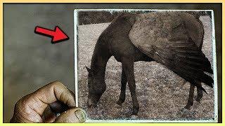 Zwierzęta KTÓRE WYGINĘŁY przez człowieka!