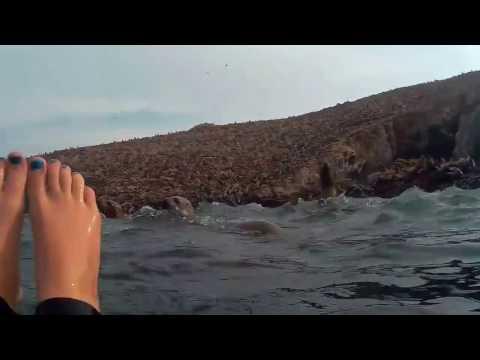 Swimming with Sea Lions (Islas Palomino, Callao / Lima, Peru)