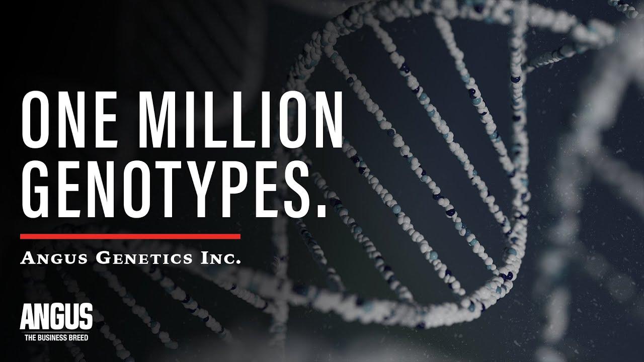 Angus Members Achieve 1 Million Genotypes