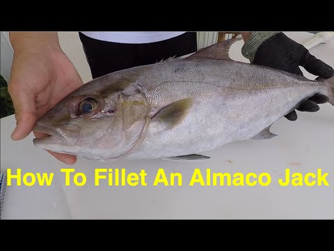 Filleting Fish With A Sea Grant Agent: Almaco Jack