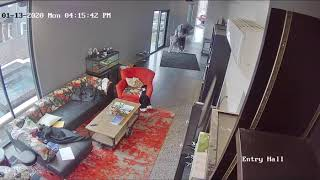 Great Dane Scares Intruder Entering House Sneakily - 1098520