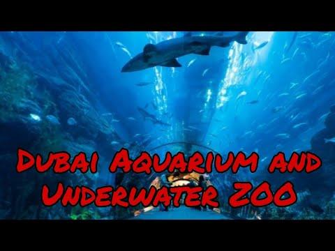 Vlog 12/Dubai Aquarium & Underwater Zoo