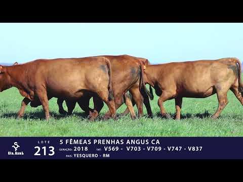 LOTE 213 - TAT V569, TAT V703, TAT V709, TAT V747 e TAT V837
