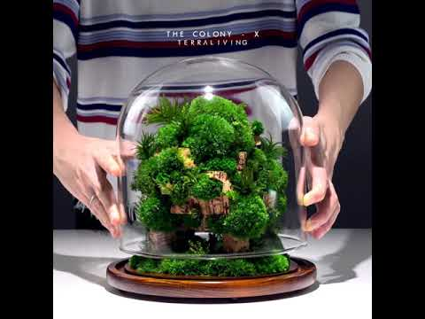 The Colony - X, Tree Moss Forest, a luxurious botanical sculpture by TerraLiving