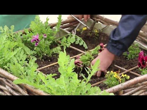 Jardin thérapeutique : Fondation Georges Truffaut & Maison des Aulnes - Jardinerie Truffaut TV