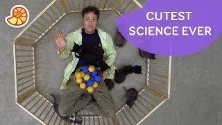 Science Max: The Atom Explained with Kittens thumbnail