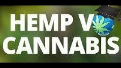 Hemp V. Marijuana - Comparison & Difference - Common Question Answered